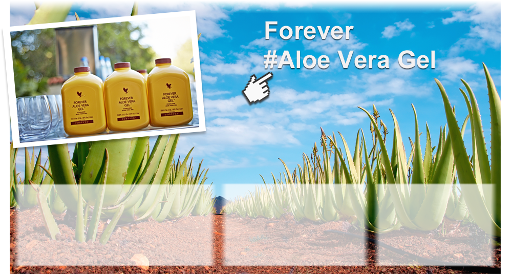 //gallery.foreverliving.com/gallery/NLD/image/Marketing_Homepage/Forever_Aloe_Vera_Gel_homeslide_M.png
